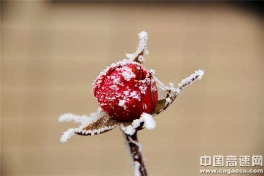 冬霜自成画