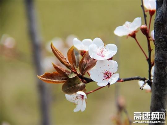 三月万物生 桃花笑春风