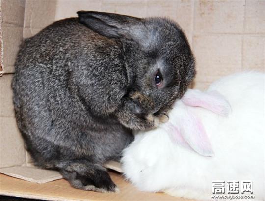 遇见小兔,萌萌可爱
