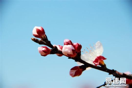 春来 · 迎春