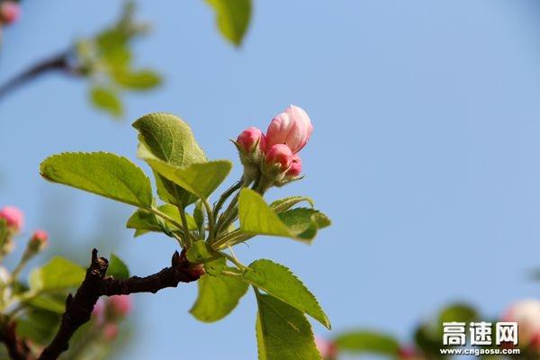 静待花开 春色满园