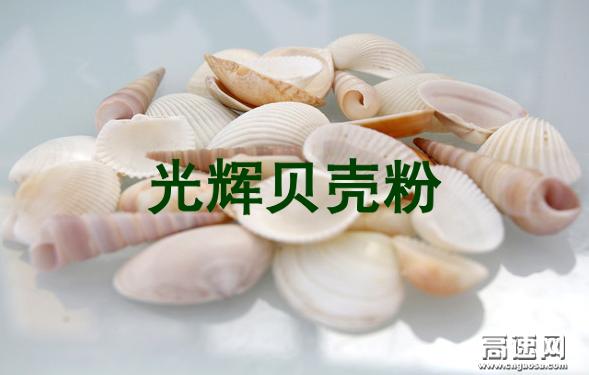 煅烧贝壳粉供应商 800目1250目 涂料专用 超白超细 厂家直销 价格优惠