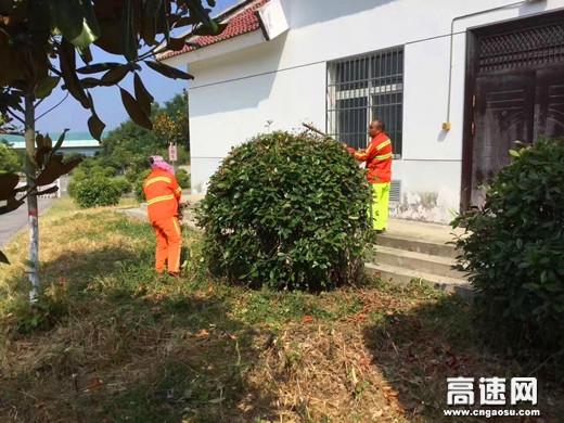 陕西高速集团西略分公司西乡管理所秋季绿化养护工作措施好效果佳