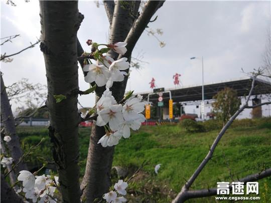 """浙江:杭千高速公司袁富站""""一杜三强""""做好""""五一""""节前准备工作"""