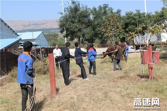甘肃:甘谷收费所洛门站成功处置一起安全隐患