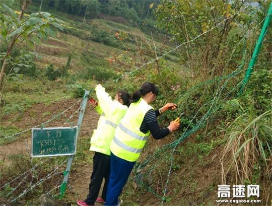 """陕西高速集团西略分公司西乡管理所预防性养护打造""""畅安舒美""""优质路"""