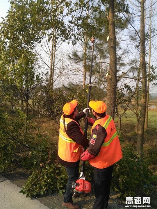 江西安福公路分局整治路树除隐患
