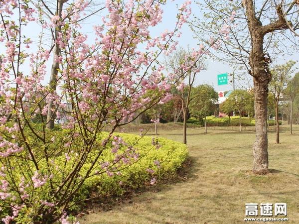 春天的色彩是五彩缤纷,姹紫嫣红。