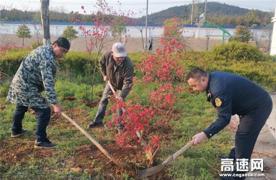 """湖北高速黄黄路政支队第三大队开展""""绿色发展 美化家园""""植树活动"""