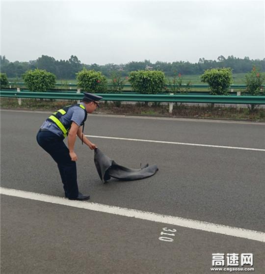 """广西玉林高速公路管理处博白大队以""""阳光的身影""""做人民的公仆"""