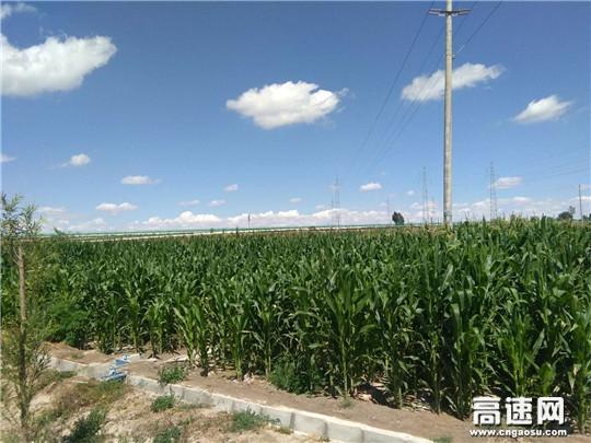 甘肃古永所水源收费站种植园面积小功劳大