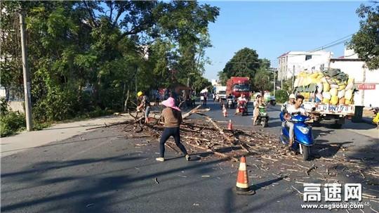 江西:遂川公路分局及时处置枯死路树保公路安全畅通