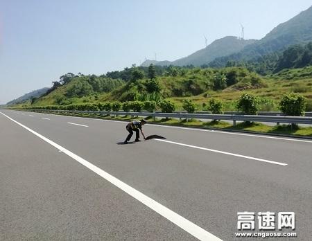 广西玉林高速公路管理处浦北大队及时清除路障,维护高速公路安全畅通