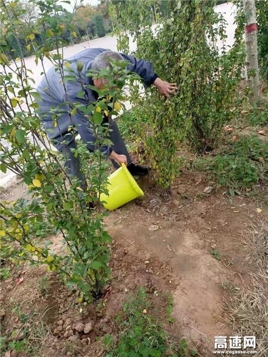 山西交通实业发展集团运城分公司绛县停车区开展秋季苗木补植工作