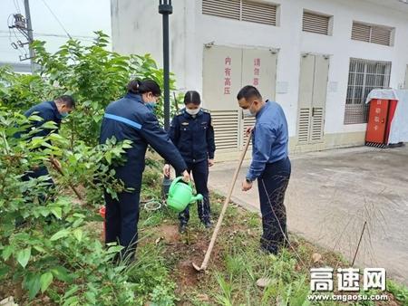 广西自治区高速公路发展中心玉林分中心:藤县大队党支部开展植树绿化活动