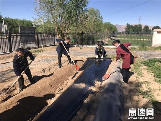 """甘肃金昌高速河西堡收费站开展种植绿色""""小菜园""""活动"""