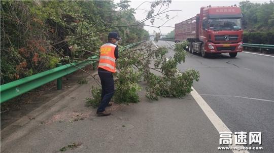 树木横卧高速路上 路政员徒手清理保畅通