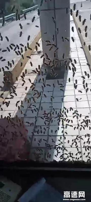 山西临汾霍州西收费站清除蜜蜂保安全畅通