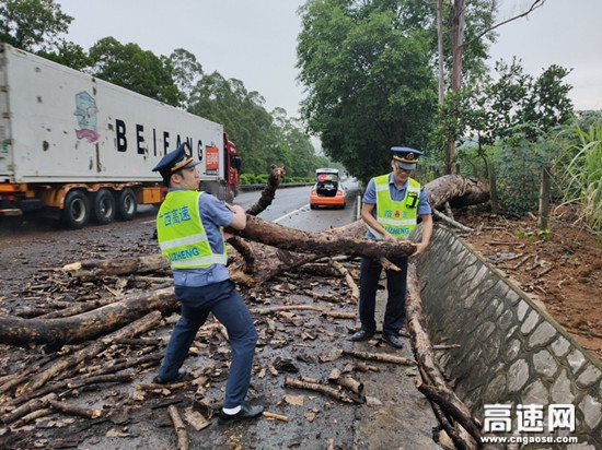 广西南宁高速公路崇左路政执法大队及时清理倒伏路树确保公路安全畅通