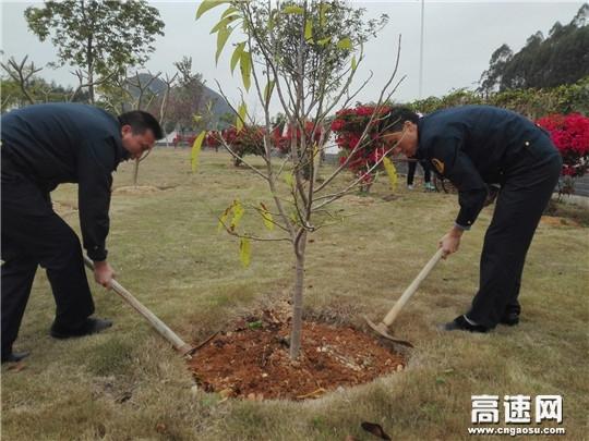 广西高速公路象州路政一大队开展义务植树活动