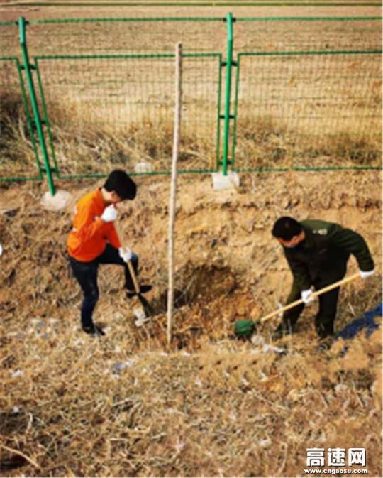 """河北沧廊(京沪)高速孟村西收费站 开展""""与春天相拥,为狮城添绿""""植树活动"""