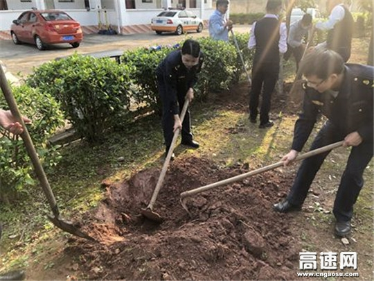 广西高速公路发展中心玉林分中心藤县路政执法大队联合开展全民义务植树活动