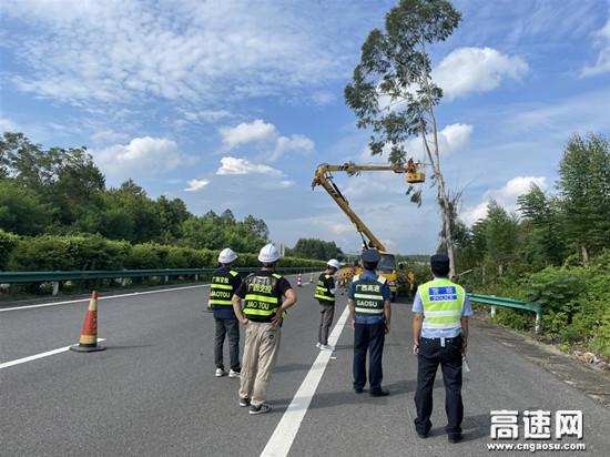广西玉林高速公路博白大队联合交警、运营公司对存在危险隐患路树进行清除