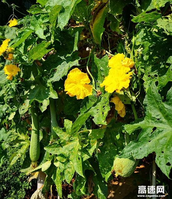 小菜园大收获--湖南长沙分公司长永养护所