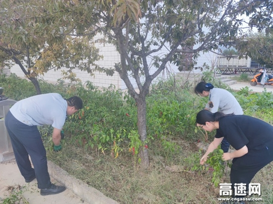 甘肃长庆桥收费站开展整理菜园活动